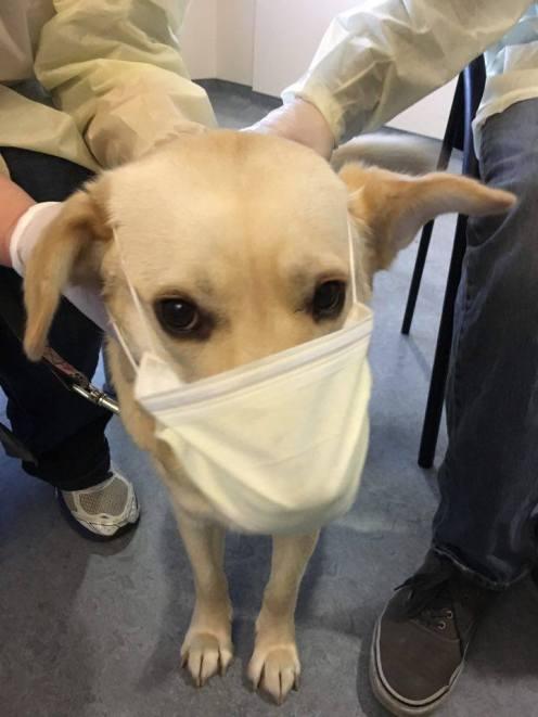 Nurse Annie